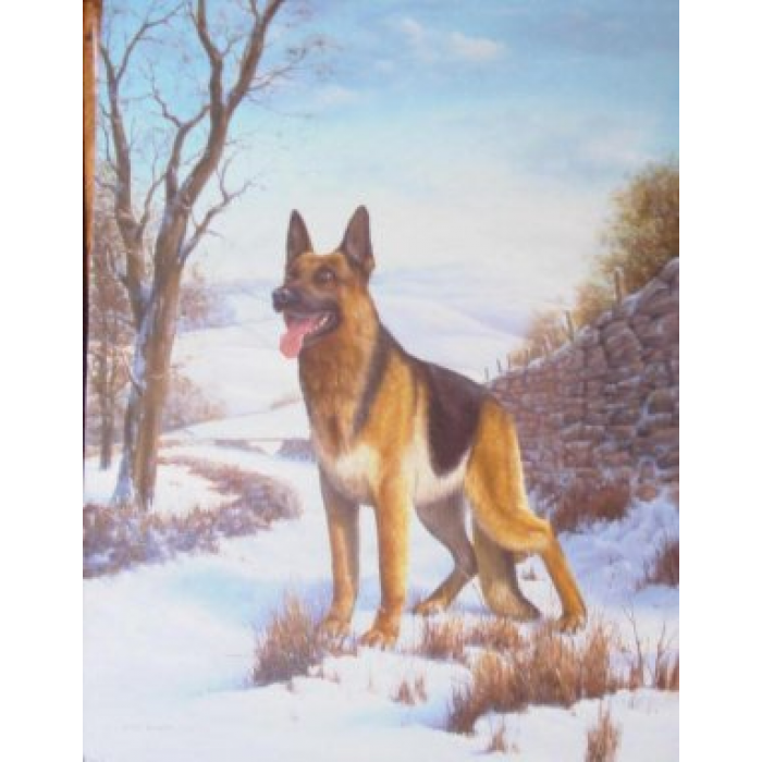 Alsatian on guard