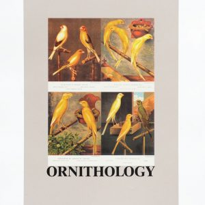Peter Blake Alphabet O Ornithology
