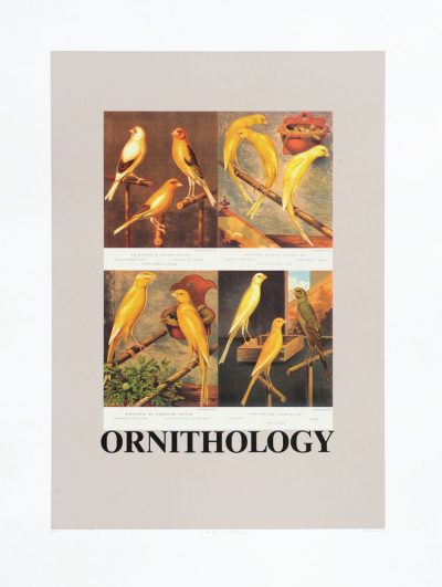 O is for Ornithology (Birds)